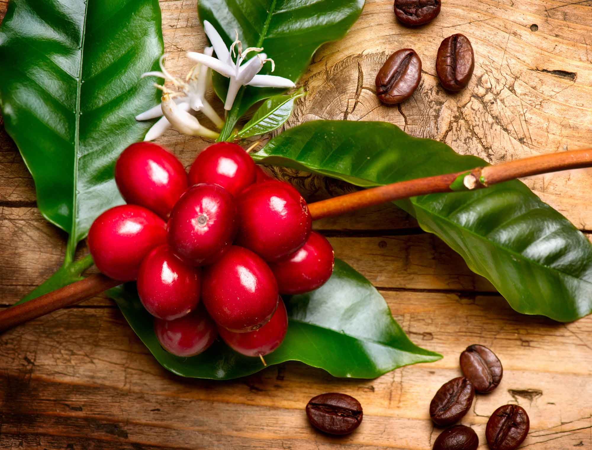 coffee beans fruit
